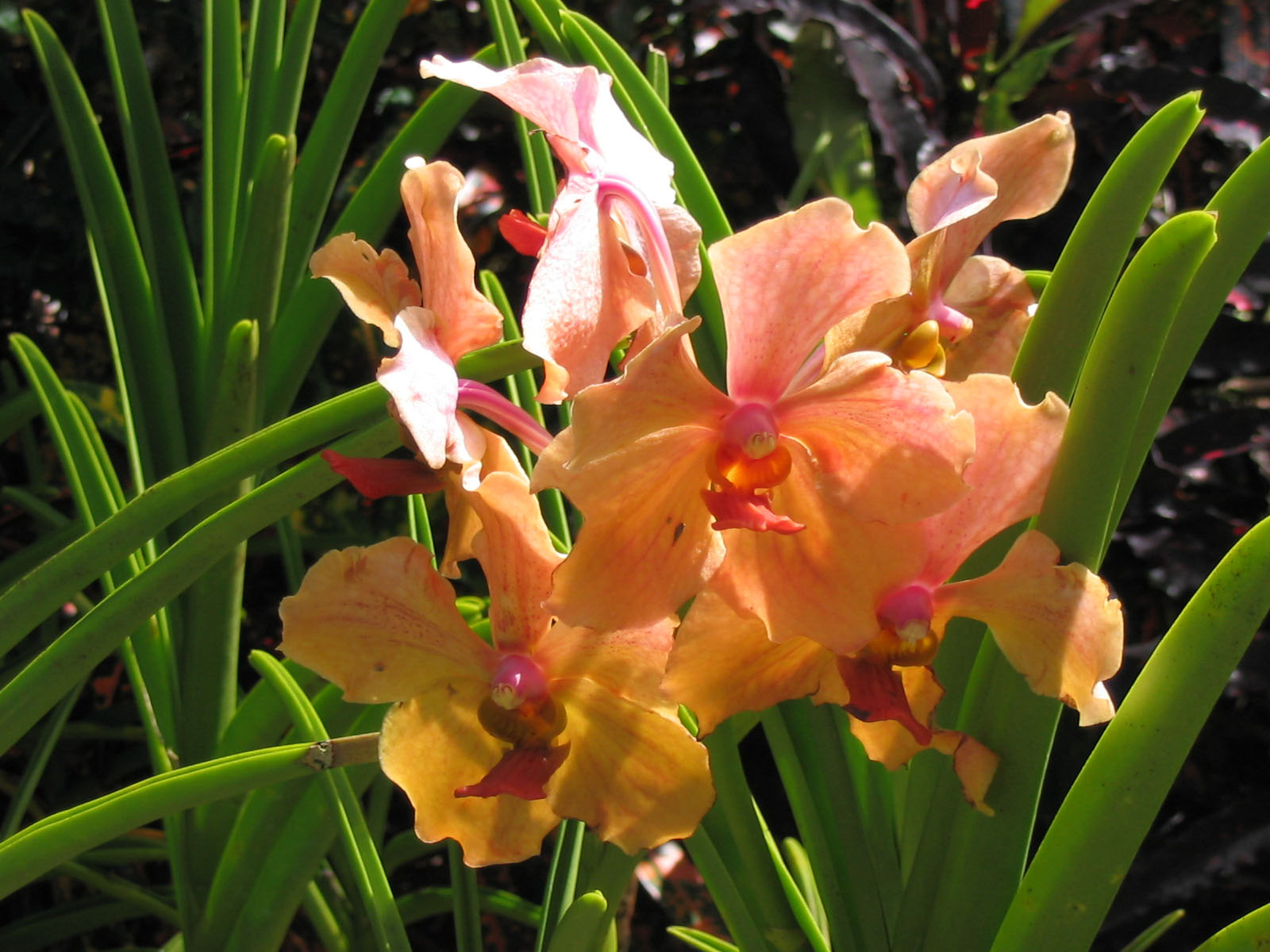 Caribbean Flowers: Discover The World With Arrangements Abroad