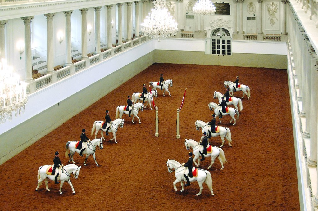 Horses courtesty of Spanish Riding School