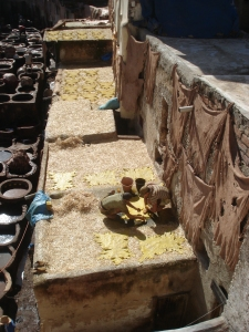 Fes tannery by Gloria DeLuca
