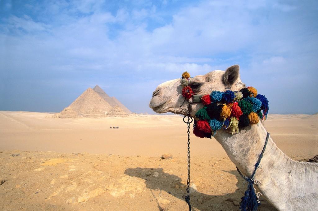 Camel and Pyramid, Giza, Egypt