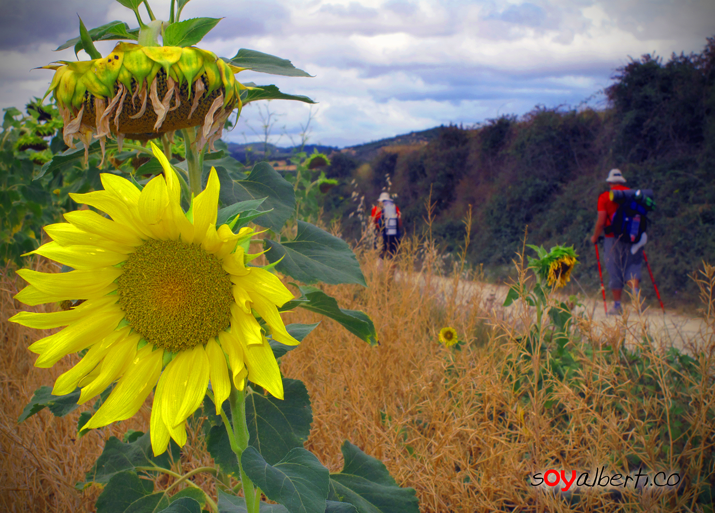 14 Fascinating Facts & Figures About the Camino de Santiago  Discover ...