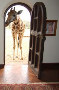Giraffee at the front door Giraffe Manor