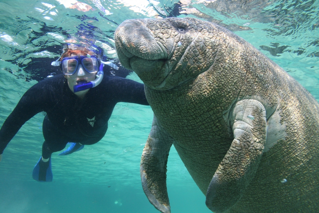 Manatee and Man