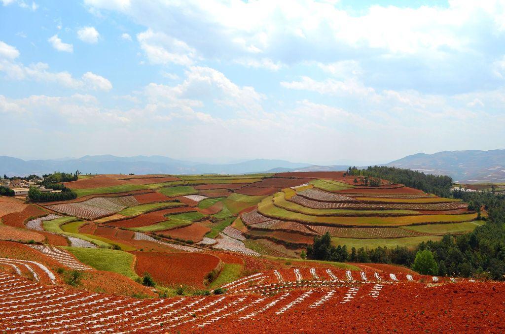 Yunnan Red Earth