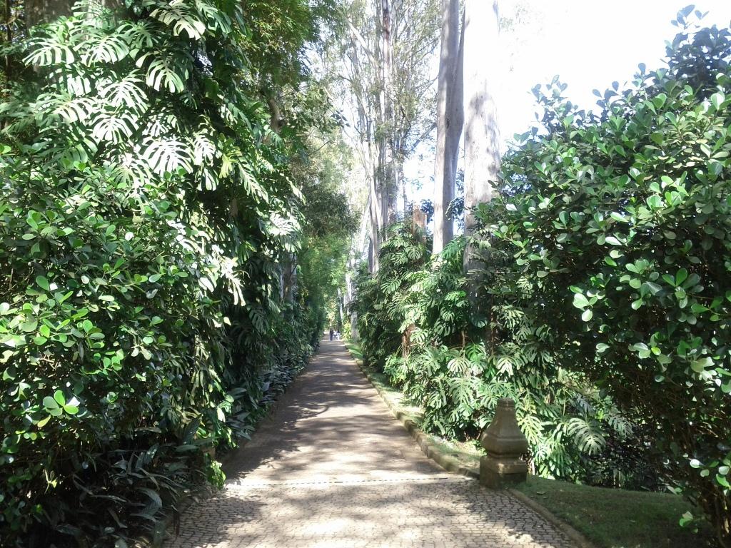 Inhotim path by Cesar Cardoso