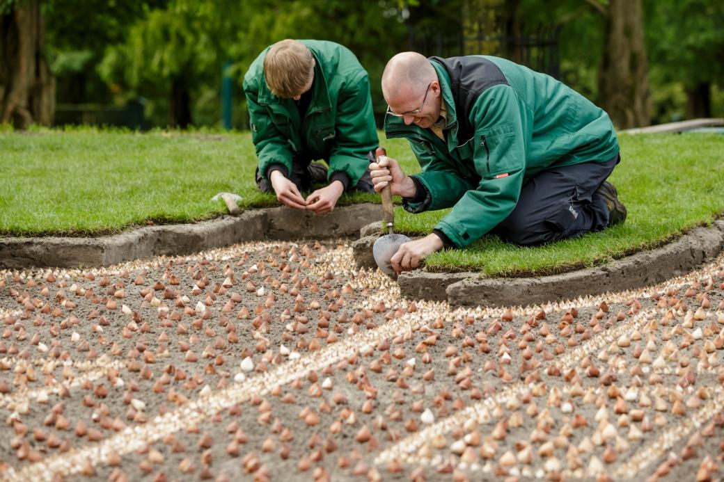 Netherlands_Keukenhof_planting