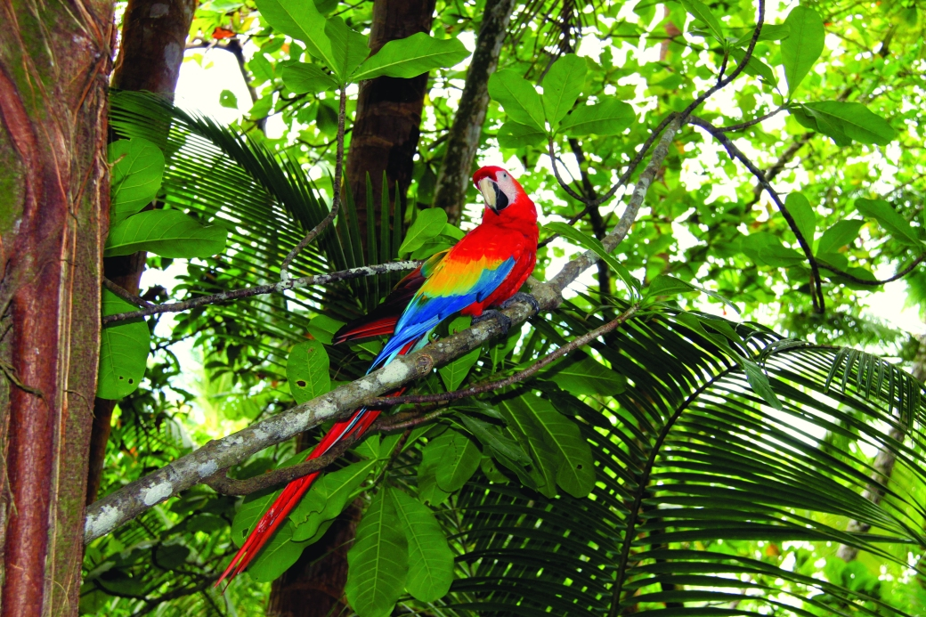 macaw-corcovado-yiannis77
